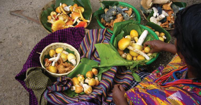guatemala-food